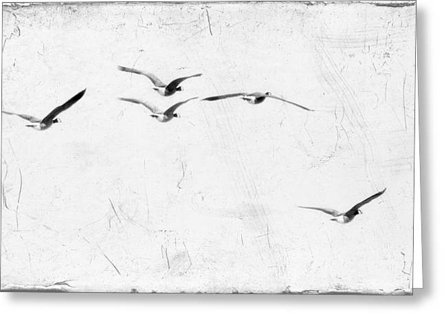 Flying Geese Greeting Cards - The Leader Greeting Card by Rebecca Cozart
