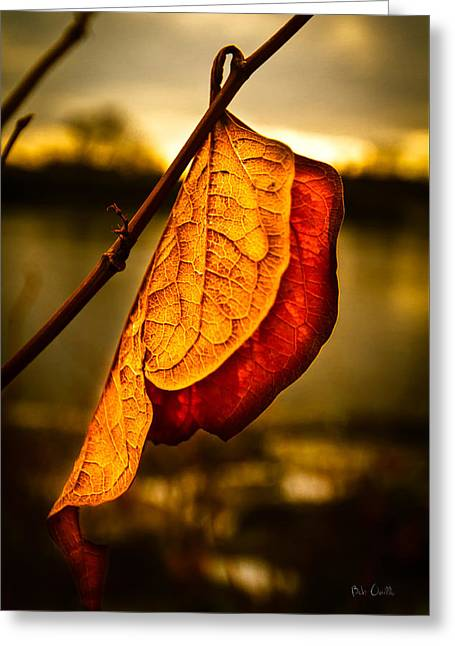 Uplifting Greeting Cards - The Leaf Across The River Greeting Card by Bob Orsillo