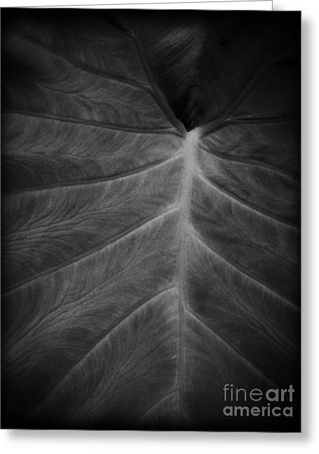 Erotic Fine Art Greeting Cards - The Leaf Greeting Card by Edward Fielding