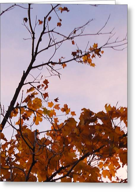 Photos Of Autumn Greeting Cards - The Leaves That Remain Greeting Card by Guy Ricketts