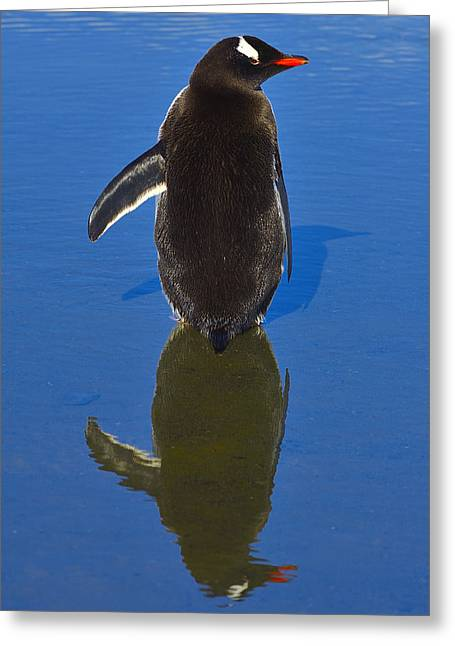 Reflecting Water Greeting Cards - The Left Wing Greeting Card by Tony Beck