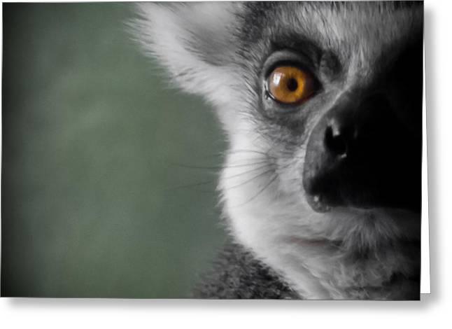Lemur Greeting Cards - The Lemur 2 Greeting Card by Ernie Echols