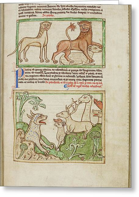The Leopard And The Panther Greeting Card by British Library
