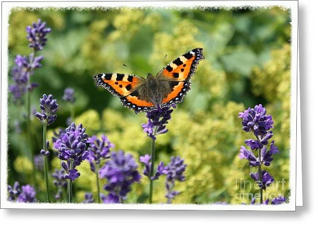 Butterfly On Lavender Greeting Cards - The Life of a Butterfly Greeting Card by Carol Groenen