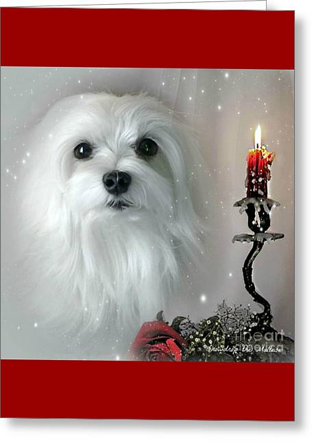 Maltese Mixed Media Greeting Cards - The Light in my Life Greeting Card by Morag Bates