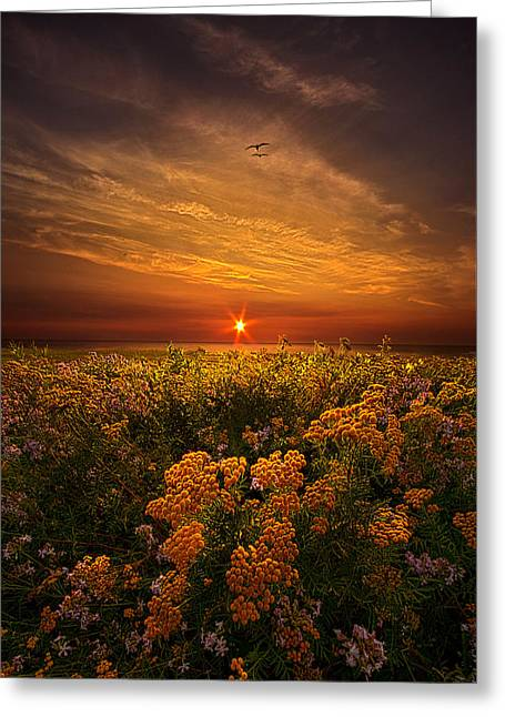 Autumn Photographs Greeting Cards - The Light of Day Greeting Card by Phil Koch