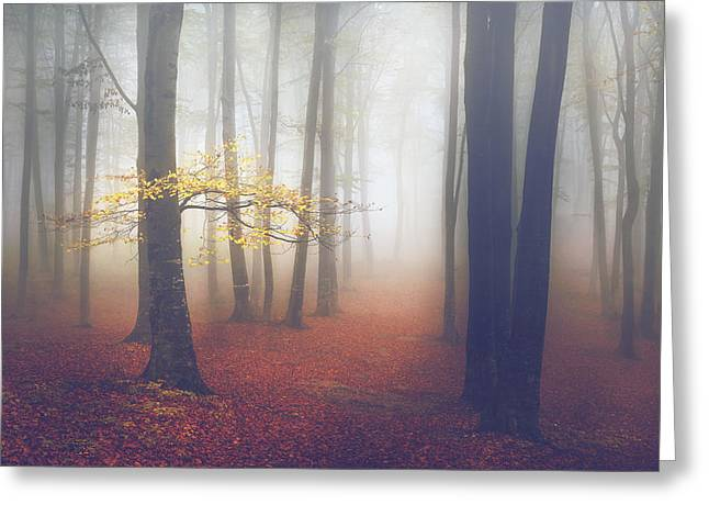 Foggy Day Greeting Cards - The Light-Tree II Greeting Card by Toma Bonciu