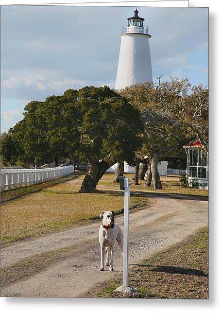 Guard Dog Greeting Cards - The Lighthouse Guardian Greeting Card by Steven Ainsworth