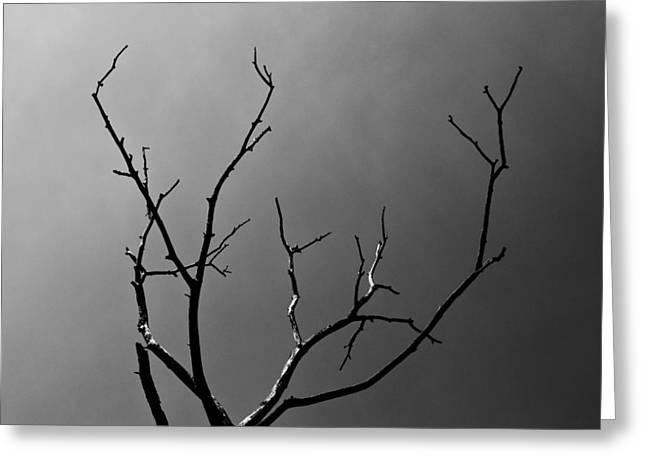 Lightning Strike Greeting Cards - The lightning Tree Greeting Card by David Pyatt