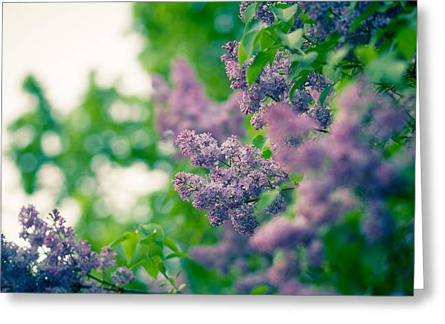 The Lilac Greeting Card by Andreas Levi