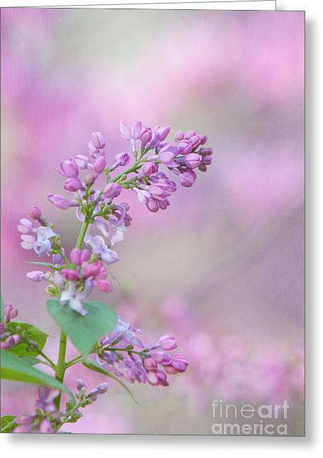Kaypickens.com Photographs Greeting Cards - The Lilac Greeting Card by Kay Pickens