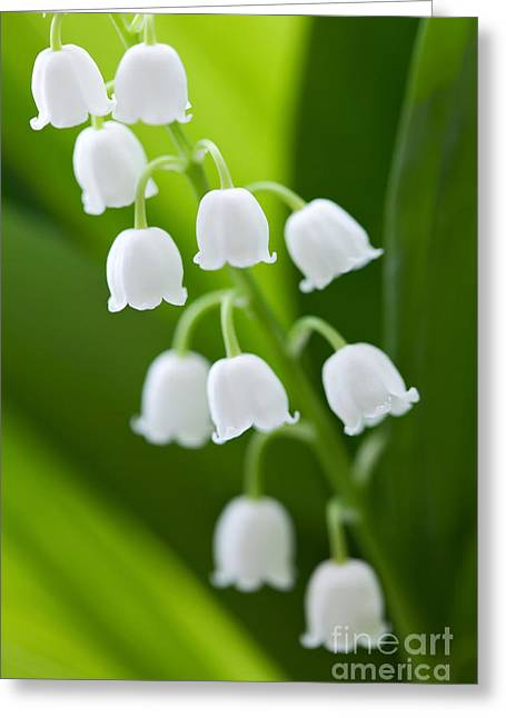 Technology Pyrography Greeting Cards - The Lily of the Valley Greeting Card by Boon Mee