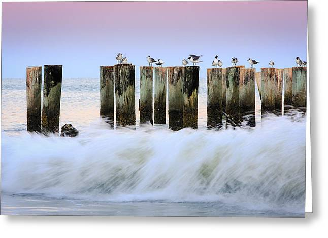 Naples Photographs Greeting Cards - The Line Up Greeting Card by Mike Lang