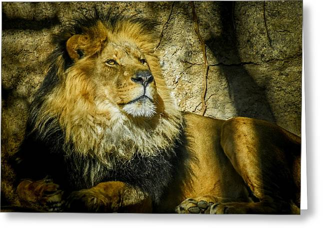 Wildcats Greeting Cards - The Lion Greeting Card by Ernie Echols