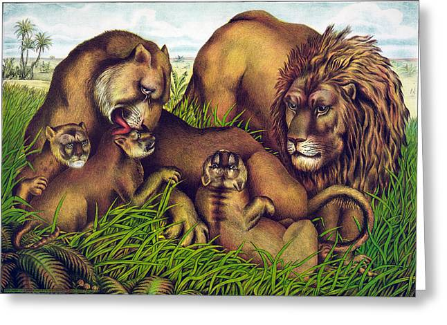 Chromolithograph Greeting Cards - The Lion Family Greeting Card by Nomad Art And  Design