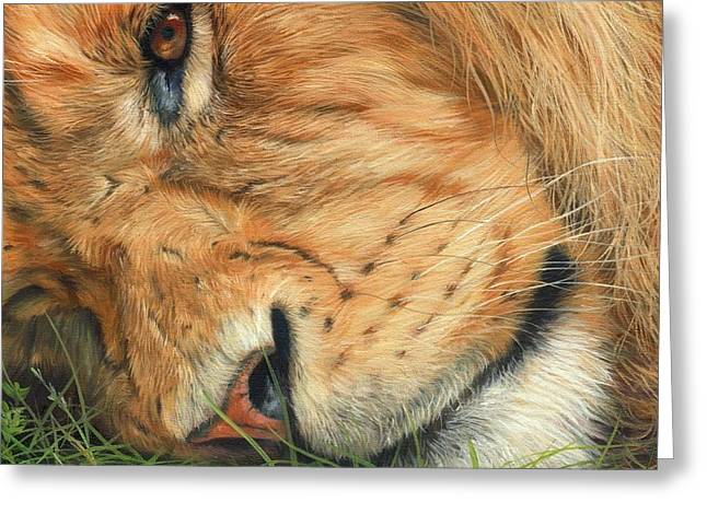 Lions Greeting Cards - The Lion Sleeps Greeting Card by David Stribbling
