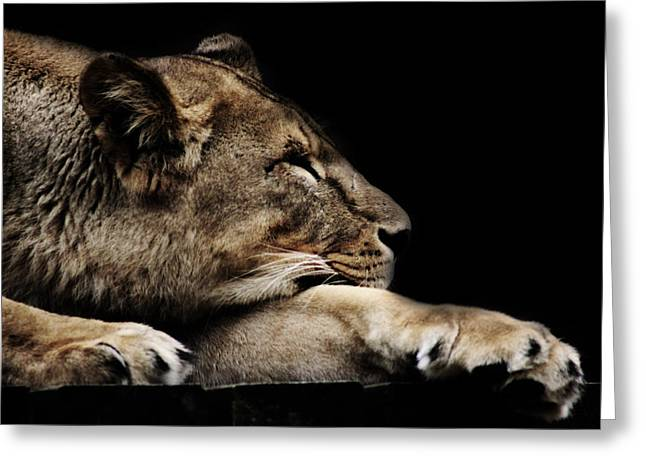 Lions Greeting Cards - The Lion Sleeps Tonight Greeting Card by Martin Newman