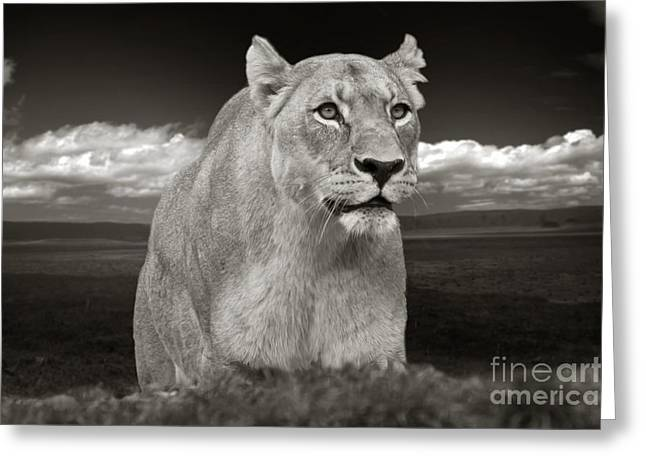 Lioness Greeting Cards - The lioness Greeting Card by Christine Sponchia