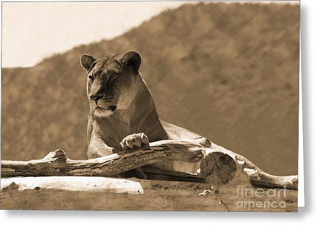 Lioness Greeting Cards - The Lioness Out of Africa Greeting Card by Janice Rae Pariza