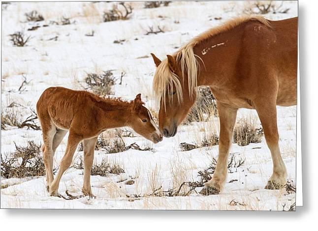 The Little One Greeting Card by Sandy Sisti