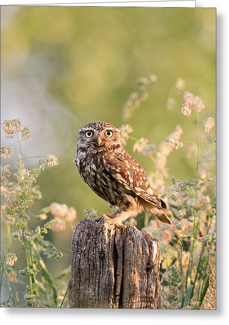 Cute Owl Greeting Cards - The Little Owl Greeting Card by Roeselien Raimond