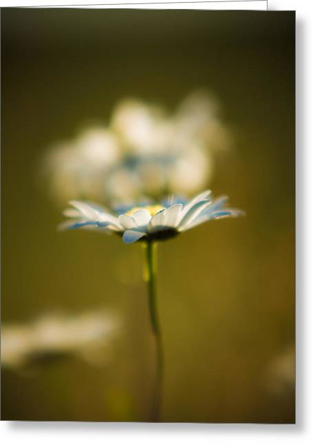 Bellis Greeting Cards - The Little Things in Nature Greeting Card by Matt Dobson
