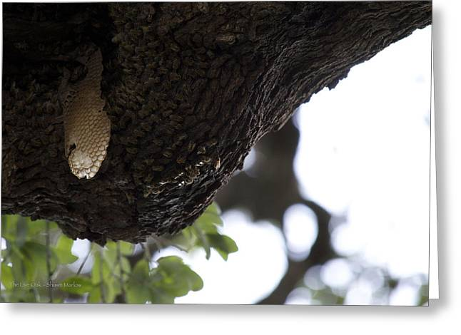 Bad Ass Greeting Cards - The Live Oak Greeting Card by Shawn Marlow