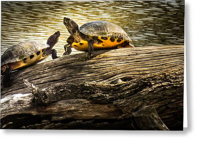 Love The Animal Greeting Cards - The Log Waltz Greeting Card by Karen Wiles