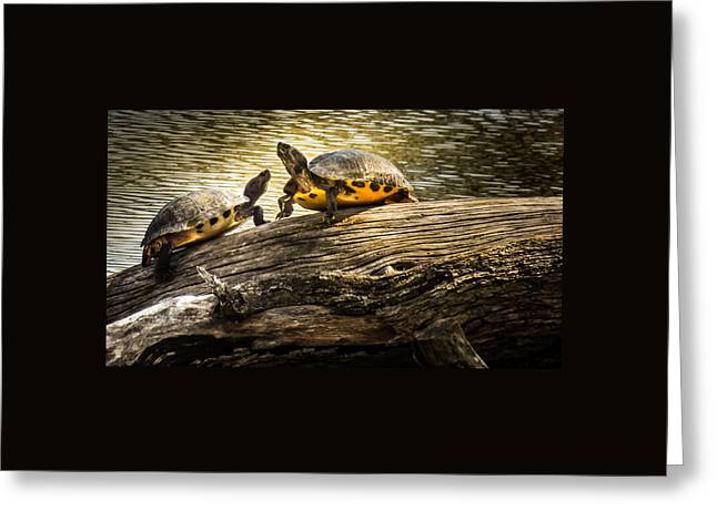 The Log Waltz Greeting Card by Karen Wiles