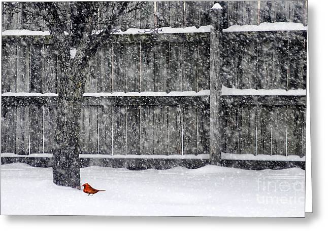 Blizzard Scenes Greeting Cards - The Lone Cardnial Greeting Card by Darren Fisher