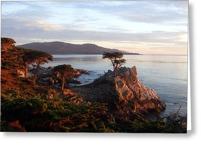 Golfcourse Greeting Cards - The Lone Cypress 2 Greeting Card by Mike Podhorzer