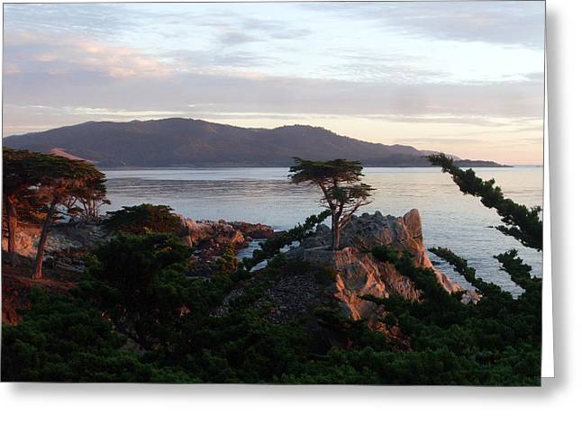 Ocean Vista Greeting Cards - The Lone Cypress 3 Greeting Card by Mike Podhorzer