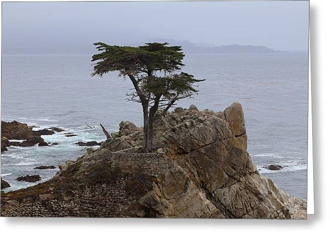 The Lone Cypress Greeting Cards - The Lone Cypress At Pebble Beach Greeting Card by Viktor Savchenko