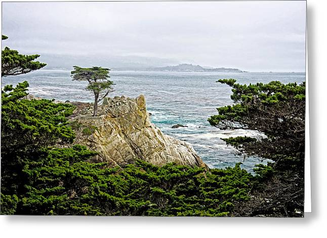 The Lone Cypress Greeting Cards - The Lone Cypress Greeting Card by Bill Boehm