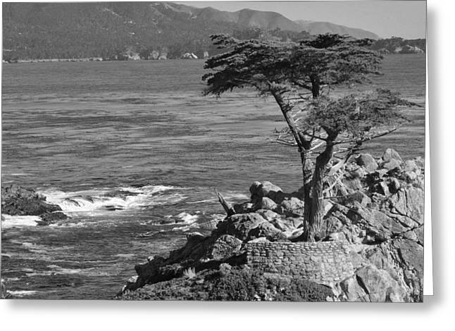 The Lone Cypress Greeting Cards - The Lone Cypress Black and White Greeting Card by Angela Stafford