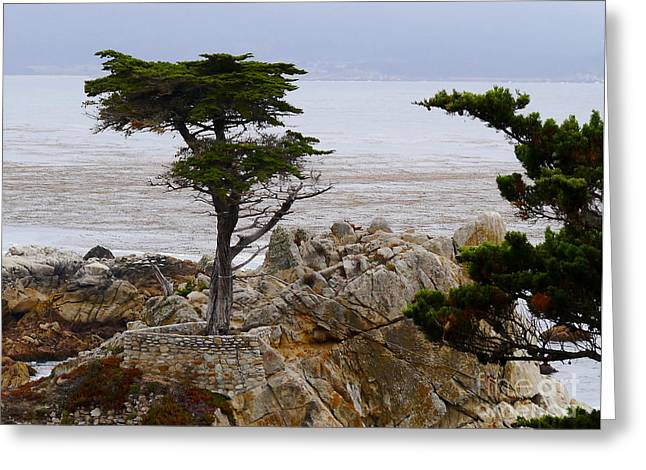 California Beaches Greeting Cards - The Lone Cypress Greeting Card by Christiane Schulze Art And Photography