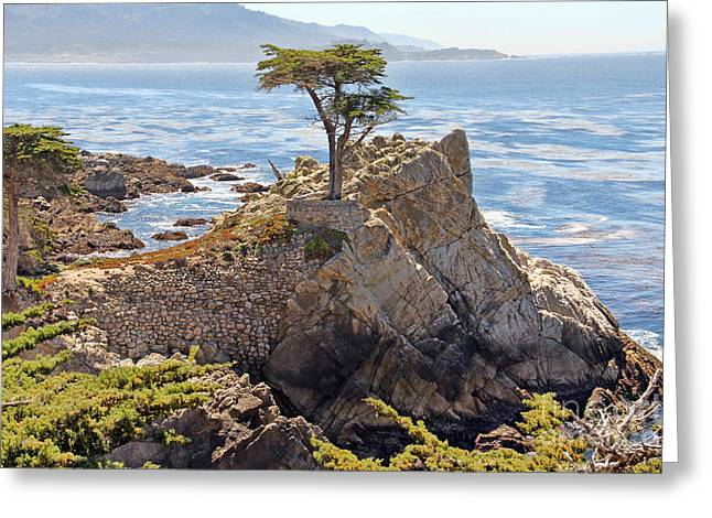 The Lone Cypress Greeting Cards - The Lone Cypress Greeting Card by Jack Schultz
