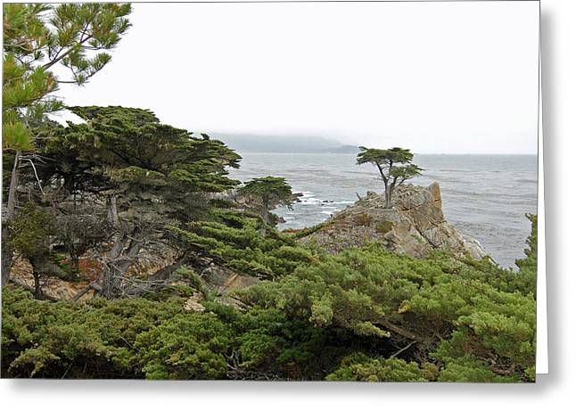 The Lone Cypress Greeting Cards - The Lone Cypress Greeting Card by Noel Stevens