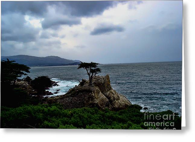 The Lone Cypress Greeting Cards - The Lone Cypress Tree Greeting Card by Lidia Anderson
