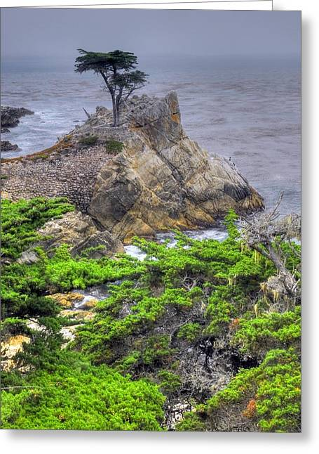 The Lone Cypress Greeting Cards - The Lone Cypress Greeting Card by Willie Harper