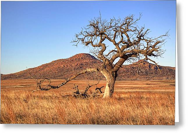 Southwest Oklahoma Greeting Cards - The Lone Tree Greeting Card by Ricky Barnard