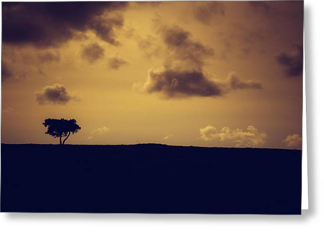 A Summer Evening Greeting Cards - The loneliness of a moorland tree Greeting Card by Chris Fletcher