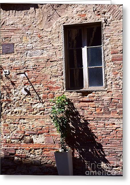 Sienna Italy Greeting Cards - The Lonely Guardian Greeting Card by Ramona Matei