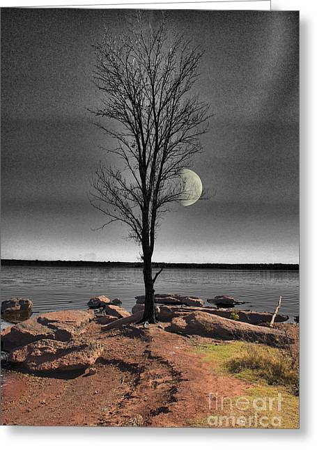 Bare Trees Greeting Cards - The Lonely Tree Greeting Card by Betty LaRue