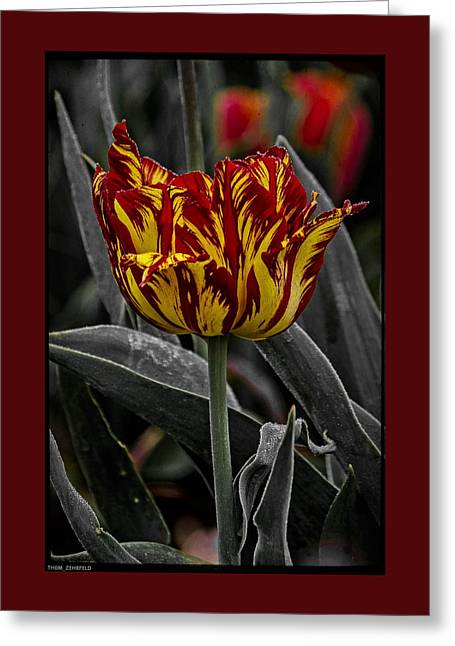 Tulip Greeting Cards - The Lonely Tulip Greeting Card by Thom Zehrfeld