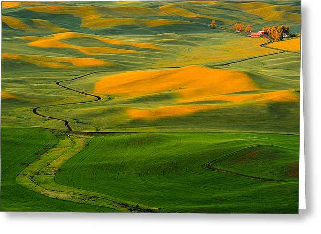 Green And Yellow Greeting Cards - The Long and Winding Road Greeting Card by Dan Mihai