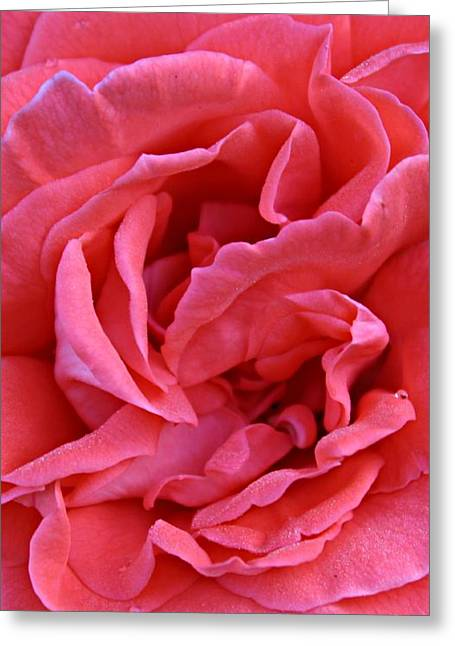 Slimline Greeting Cards - The Long Pink One Greeting Card by Clare Bevan