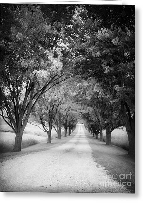 Grainy Greeting Cards - The Long Road Home Greeting Card by Edward Fielding
