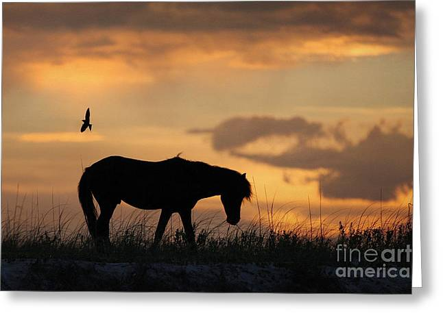 Filly Art Greeting Cards - The Longing Greeting Card by Lyndsey Warren