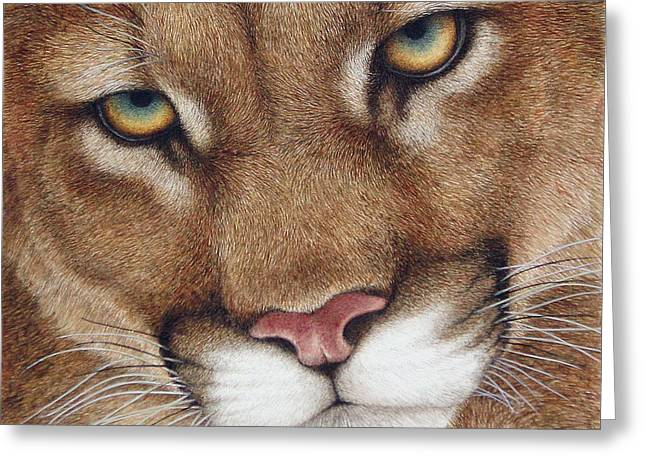 Wildlife Watercolor Greeting Cards - The Look cougar Greeting Card by Pat Erickson